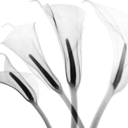 Rayografie di Renzo Bertasi